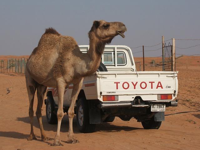 camel-543079_640